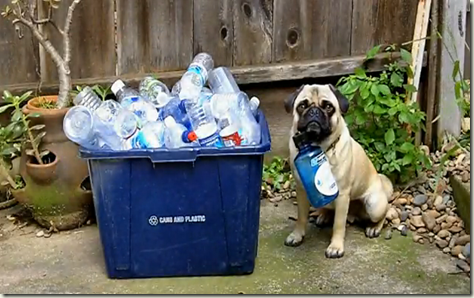 recycling-pug