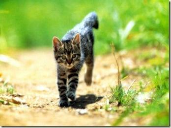 Running-Kitten