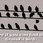 crossfit-bird.jpg