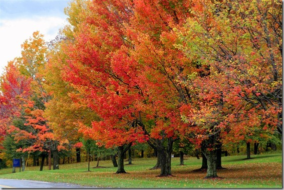Fall-Foliage-1-Large