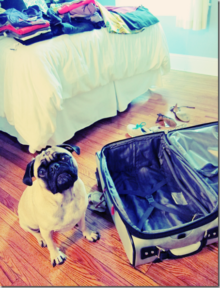 PackingWithThePug