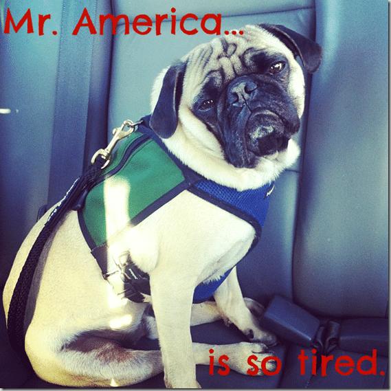 Mr._America
