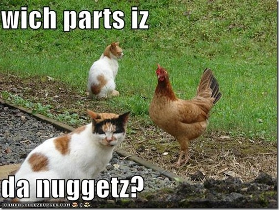 funny-pictures-cat-wonders-what-part-of-the-chicken-is-the-nugget