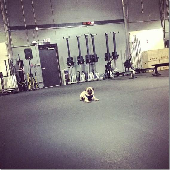 CrossFit Pugs