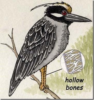 hollow_bones