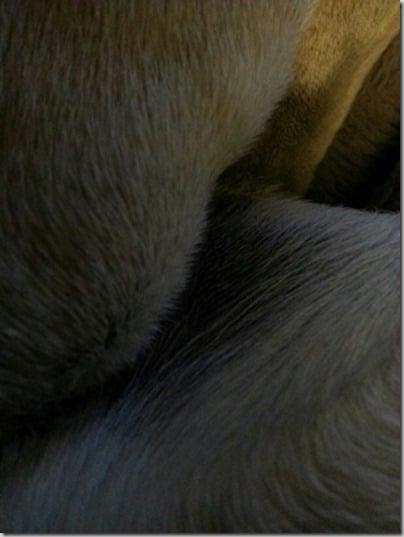 pug part 2