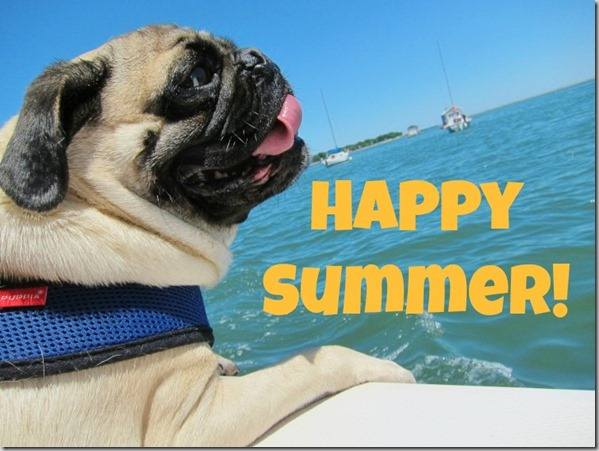 happy summer pug