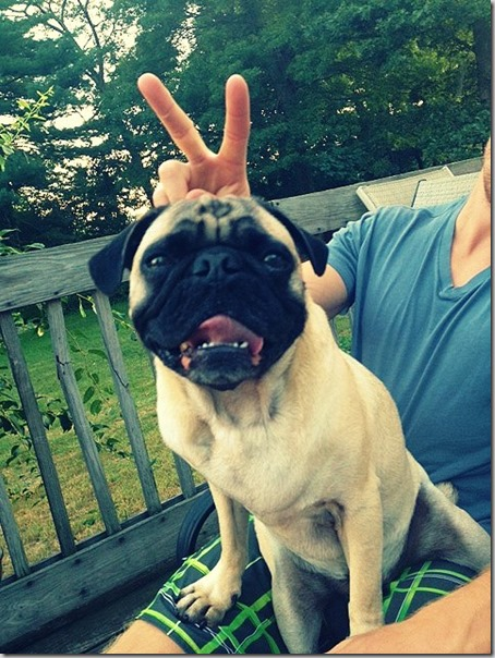 pug with bunny ears