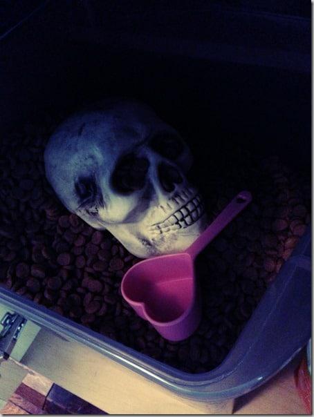 skull surprise