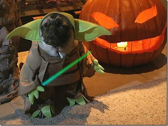 geeky_pug - Pugs Halloween Costumes