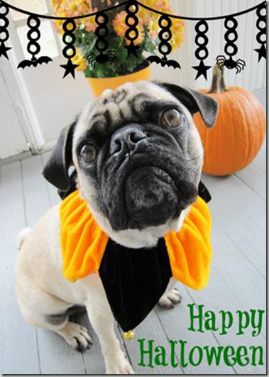 happyhalloween_pug