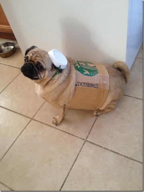 pug starbucks cup