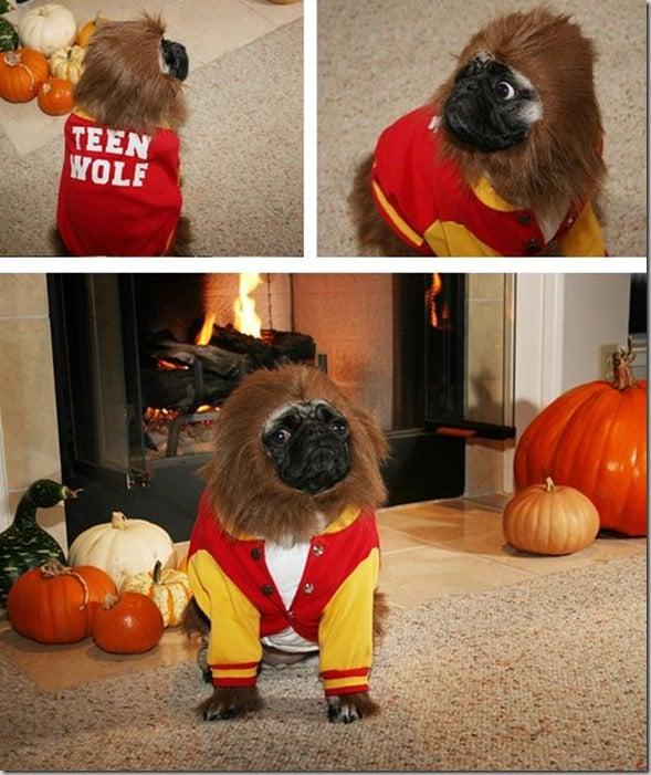 pug teen wolf - Pugs Halloween Costumes