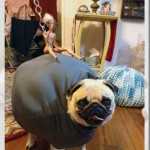 wrecking ball pug