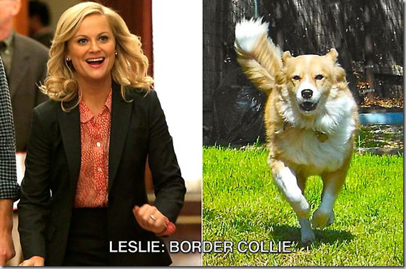 leslie_border_collie