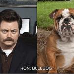 ron_swanson_bulldog_thumb.png