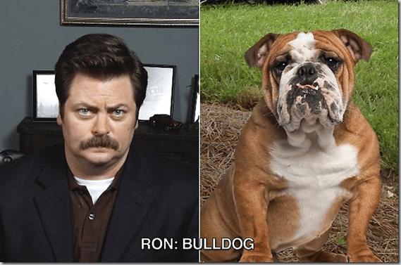 ron_swanson_bulldog