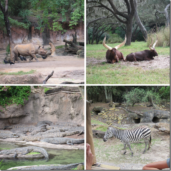 safari_animals