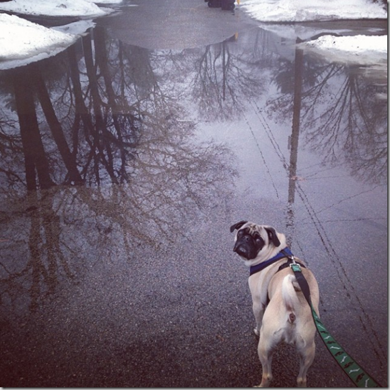 Murphy_hates_puddles_