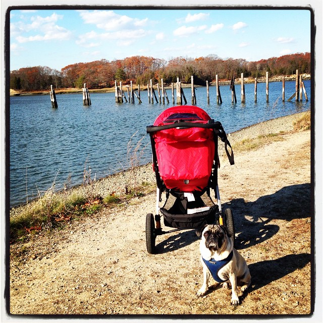 Walk at the park with two of my favorite boys! #junebaby #pugsofinstagram #barecovepark #hingham #barecove #walk #family #familyfitness #fitmom #ffcheckin