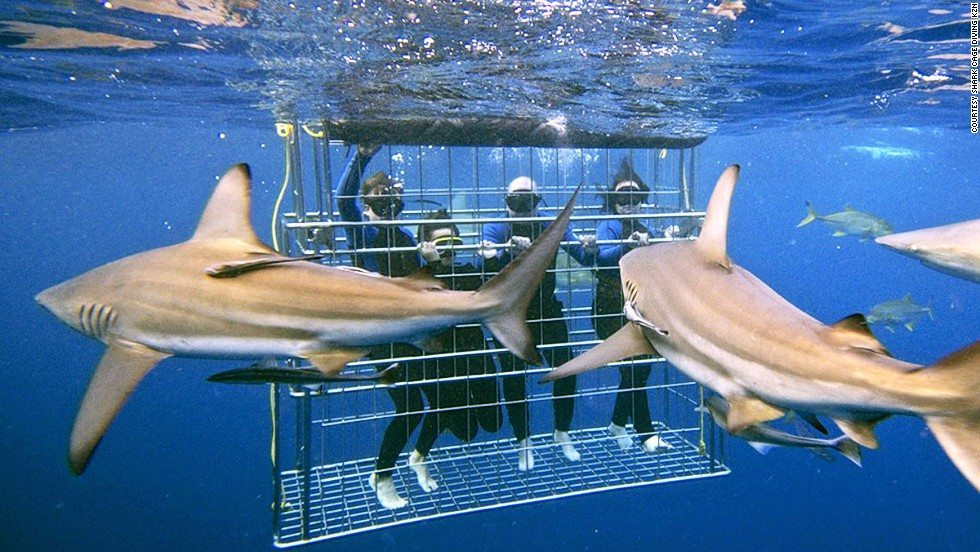 130731172545-sharks-cage-diving-kzn-horizontal-large-gallery