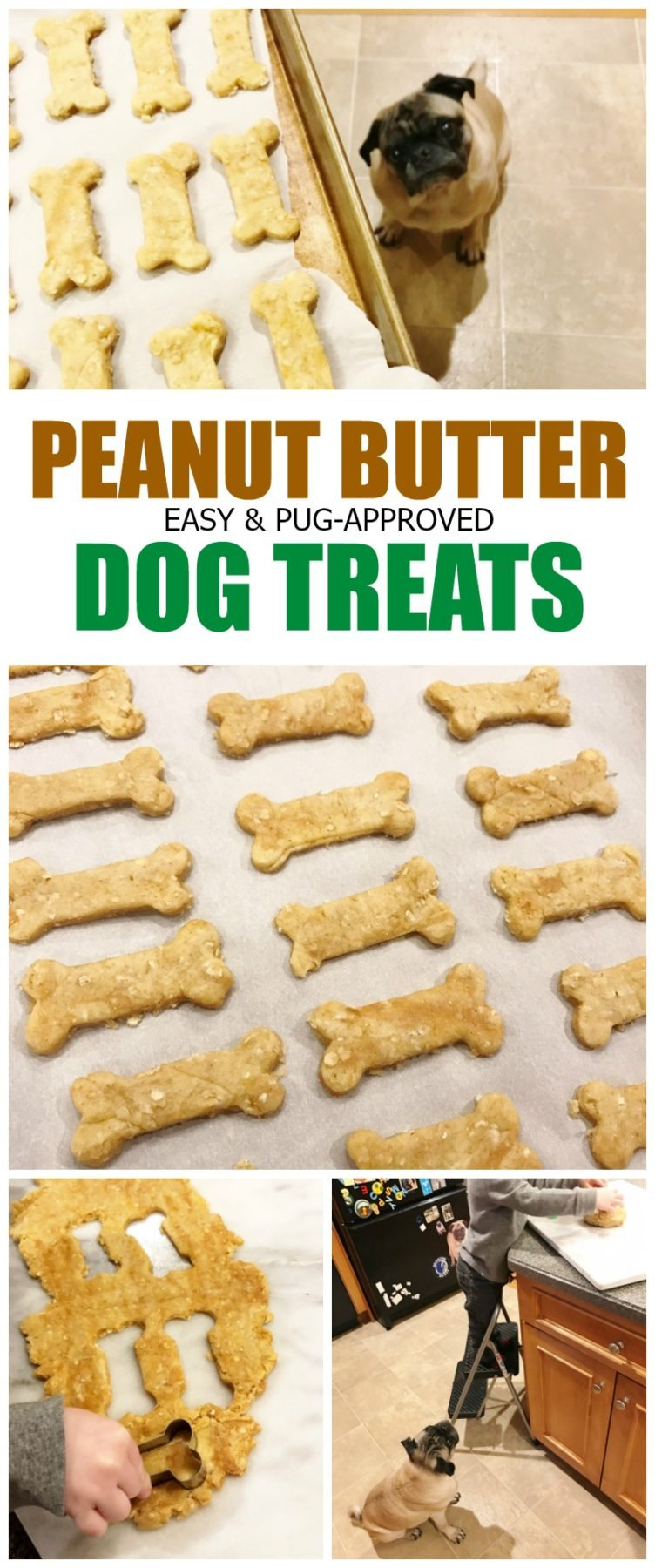 peanut-butter-dog-treats-pug-approved