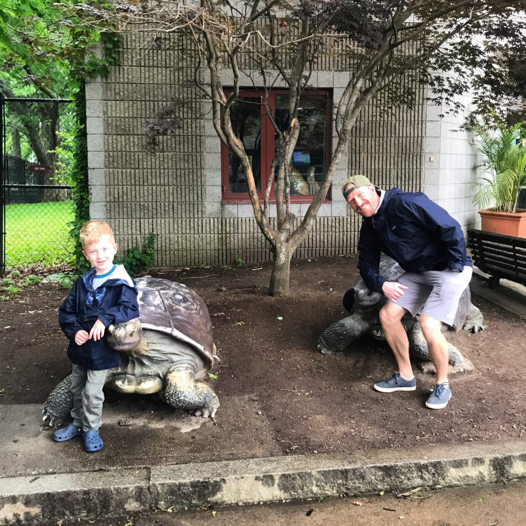 Turtle statues at Franklin Park Zoo
