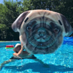 Pug face pool float